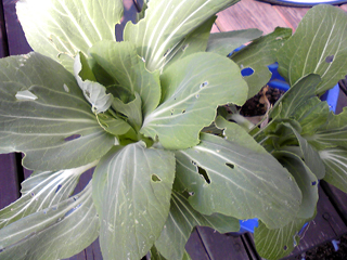 上から見たナゾの植物