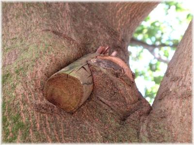 131123G 003添え木