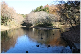 131213E 013水鳥の池