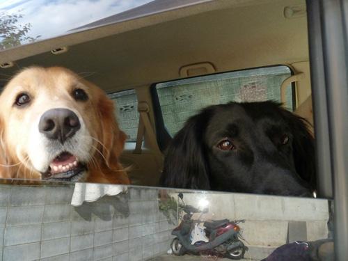 in car2