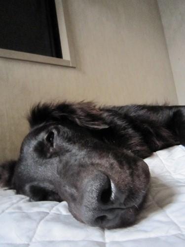 ボム寝顔3