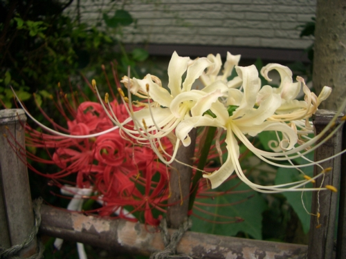 20071025 天上の花.jpg