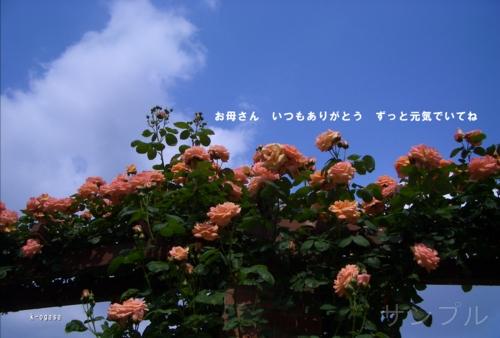 20090506 母の日カード.jpg