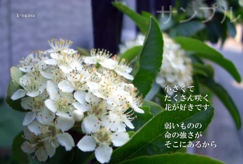 20090606 小さな花.jpg