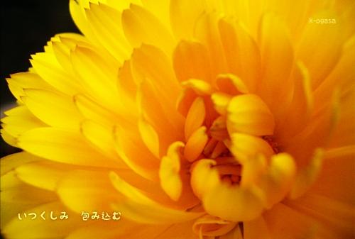 20091118 包み込む(短詩).jpg
