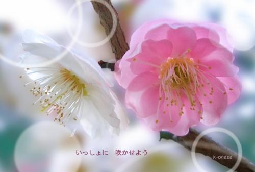 20091206 ここに出会って(短詩).jpg