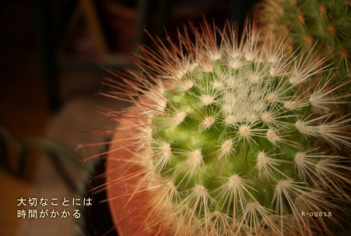20091206 ゆっくり大きく育てて欲しい(短詩).jpg