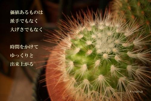 20091206 ゆっくり大きく育てて欲しい(長詩).jpg