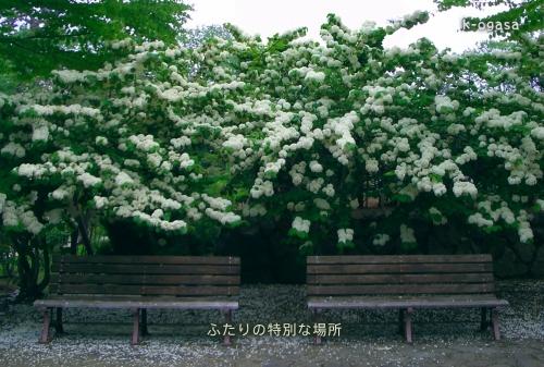 20091206 特別席(短詩).jpg