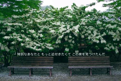 20091206 特別席(長詩).jpg