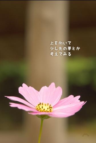 20100619 時々.jpg