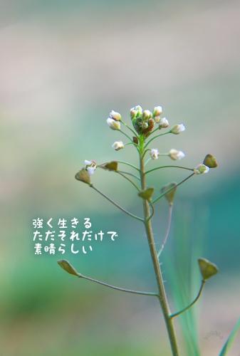 20100619 尊厳.jpg