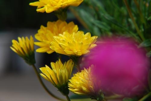 20100824 花の色の理由.jpg