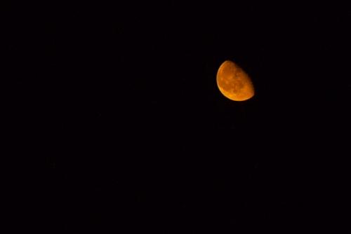 20100912 夜の闇を照らす.jpg