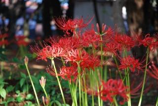 20101003 千葉公園2.jpg