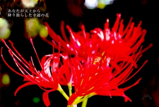 20101003 天上の花.jpg