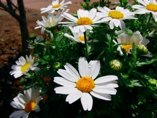 20110423 チビ花.jpg