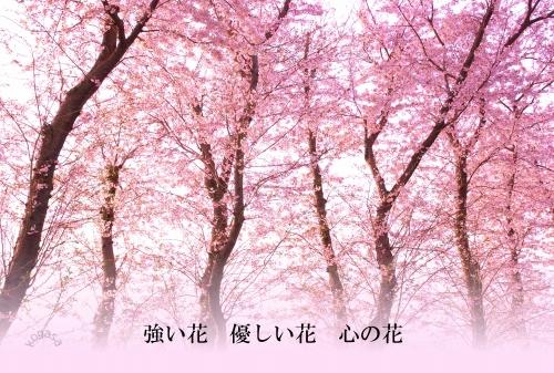 20110522 花.jpg