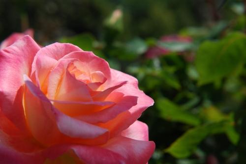 20110710 花ははすごいな.jpg