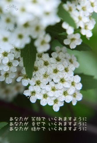 20110116 祈り.jpg