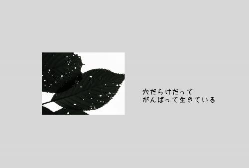 20111014 穴だらけ.jpg