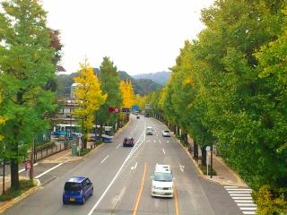 20111113 甲州街道銀杏並木-1.jpg