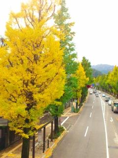 20111113 甲州街道銀杏並木-2.jpg