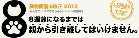 8syu_a_main_L3.jpg