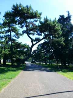 0810松林