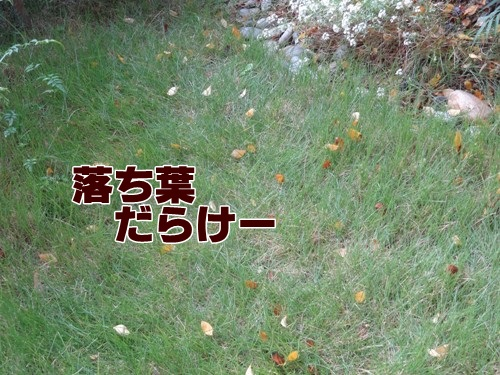 daradara2_text.jpg