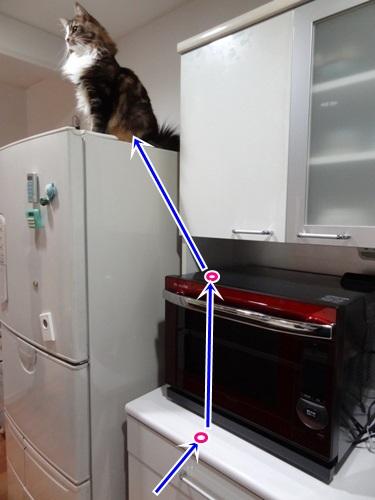 refrigerator3_text.jpg