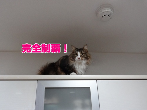 refrigerator7_text.jpg