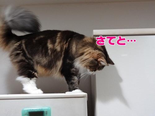 refrigerator8_text.jpg