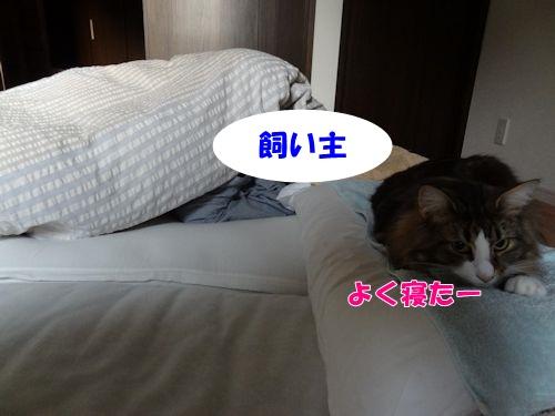 wakeup2_text.jpg