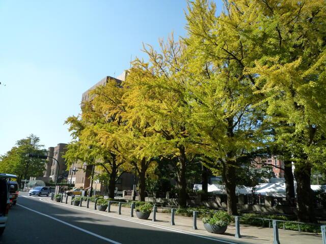 20131116-01-銀杏