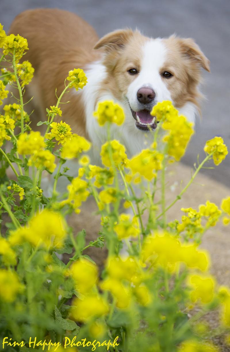 幸せの黄色い花びら