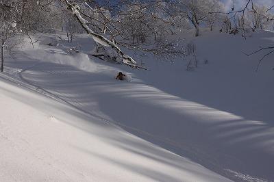尻別岳北面を滑るコハタ。