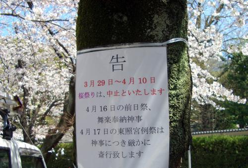 桜祭り中止