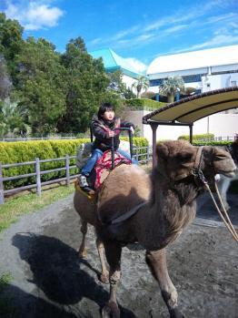 ラクダに乗った少年