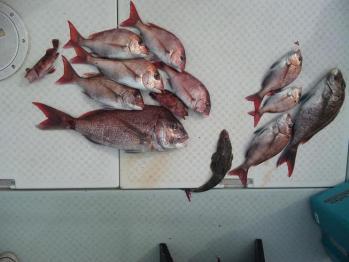 4名全員の釣果