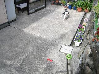 2011_05_01-05 (18)