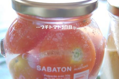 自家製酵母 プチトマト3日目