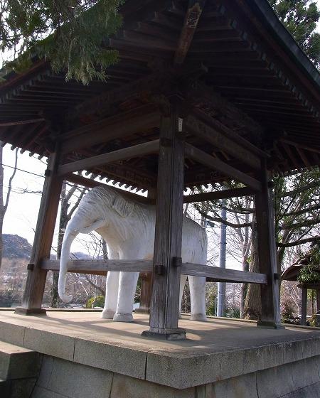130221飯能観音寺謎の白い象