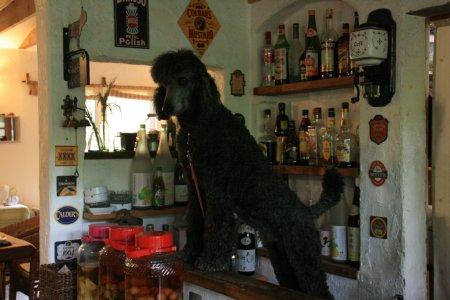 犬の家21