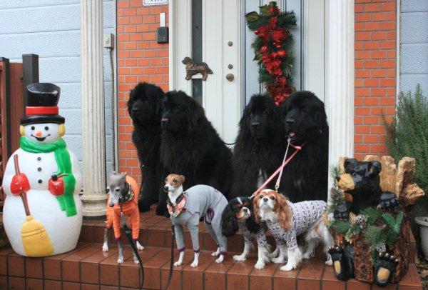 メリークリスマス20121
