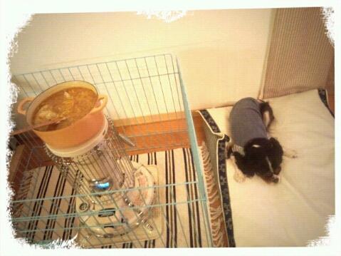 fc2blog_201211212056276ff.jpg