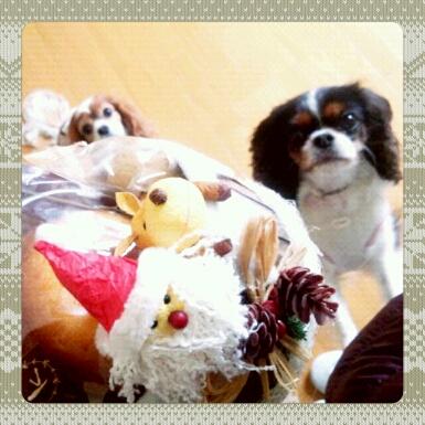 fc2blog_201211291102524da.jpg
