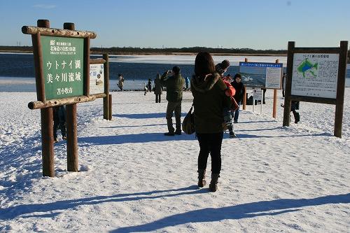 ウトナイ湖20110102