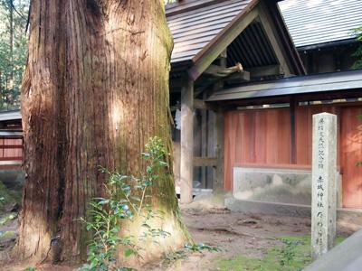 天然記念物のたわら杉