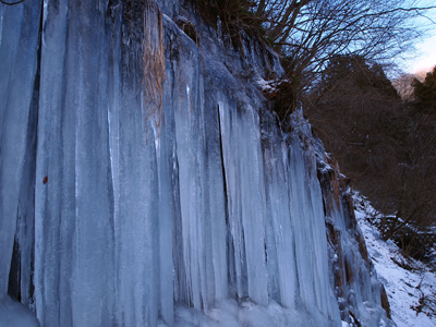梨木の氷柱6